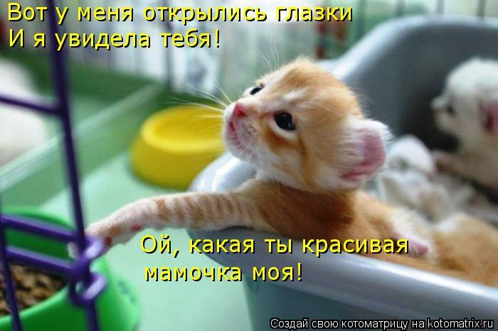 Котоматрица: Вот у меня открылись глазки И я увидела тебя! Ой, какая ты красивая мамочка моя!