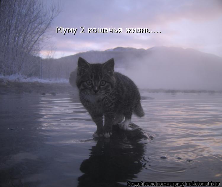 Котоматрица: Муму 2 кошачья жизнь....