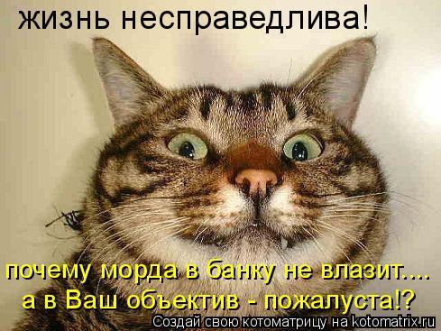 Котоматрица: жизнь несправедлива! почему морда в банку не влазит.... а в Ваш объектив - пожалуста!?