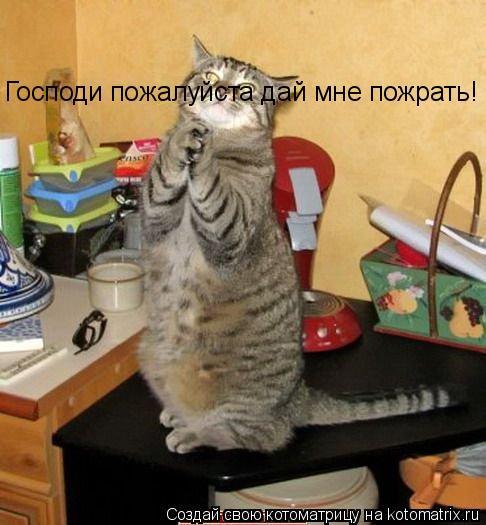 Котоматрица: Господи пожалуйста дай мне пожрать!