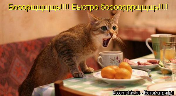 Котоматрица: Бооорщщщщь!!!! Быстро боооорррщщщь!!!!