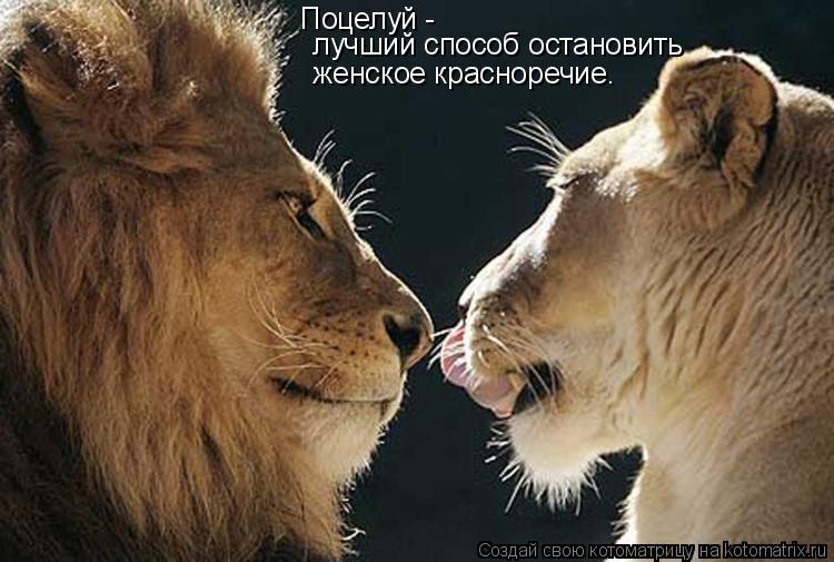 Котоматрица: Поцелуй -    лучший способ остановить  женское красноречие.