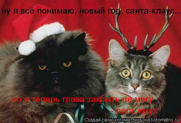 Котоматрица: ну я всё понимаю, новый год, санта-клаус..., но я теперь глаза закрыть не могу  - рога жмут