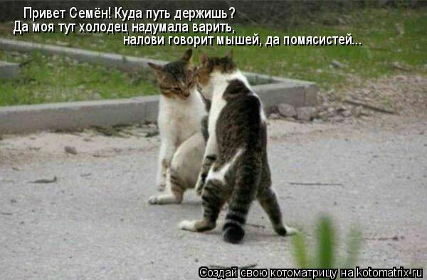 Котоматрица: Привет Семён! Куда путь держишь? Да моя тут холодец надумала варить, налови говорит мышей, да помясистей...