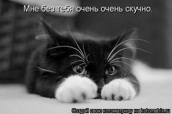 Котоматрица: Мне без тебя очень очень скучно.