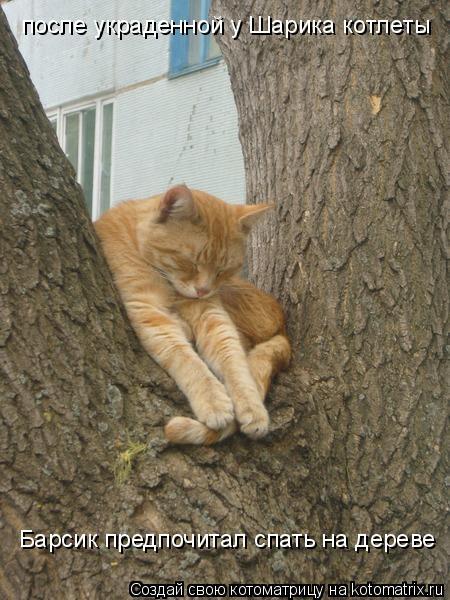 Котоматрица: после украденной у Шарика котлеты Барсик предпочитал спать на дереве