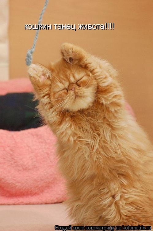 Котоматрица: кошкин танец живота!!!!
