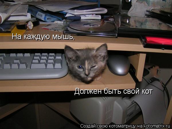 Котоматрица: На каждую мышь, Должен быть свой кот