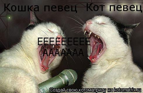 Котоматрица: Кошка певец Кот певец ААААААА ЕЕЕЕЕЕЕЕЕ