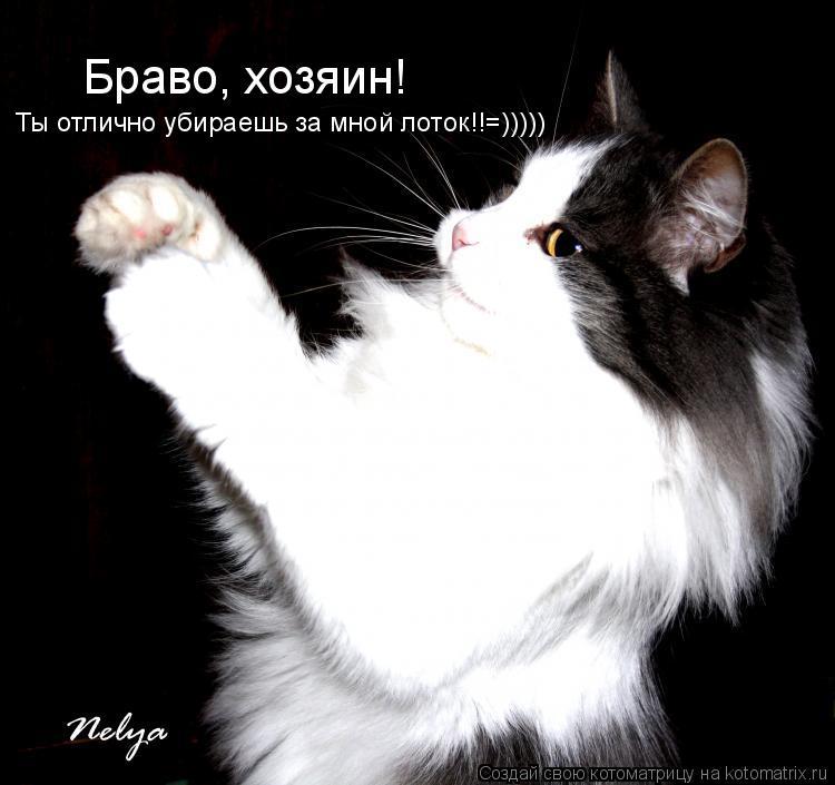 Котоматрица: Браво, хозяин! Ты отлично убираешь за мной лоток!!=)))))