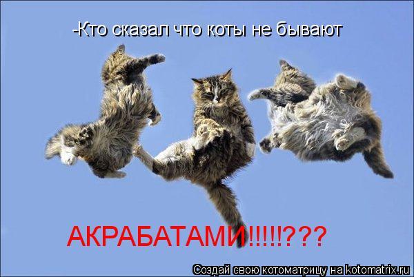 Котоматрица: -Кто сказал что коты не бывают АКРАБАТАМИ!!!!!???