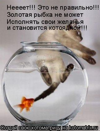 Котоматрица: Неееет!!! Это не правильно!!! Золотая рыбка не может Исполнять свои желанья и становится котоядной !!!