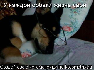Котоматрица: У каждой собаки жизнь своя