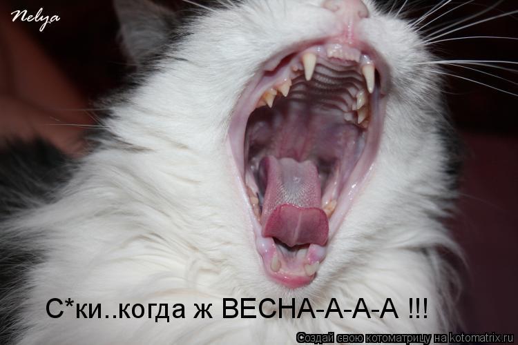 Котоматрица: С*ки..когда ж ВЕСНА-А-А-А !!!