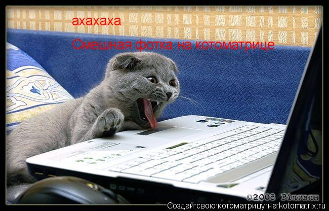 Котоматрица: ахахаха Смешная фотка на котоматрице