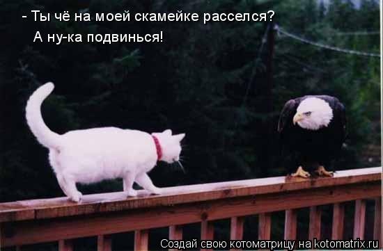 Котоматрица: - Ты чё на моей скамейке расселся? А ну-ка подвинься!