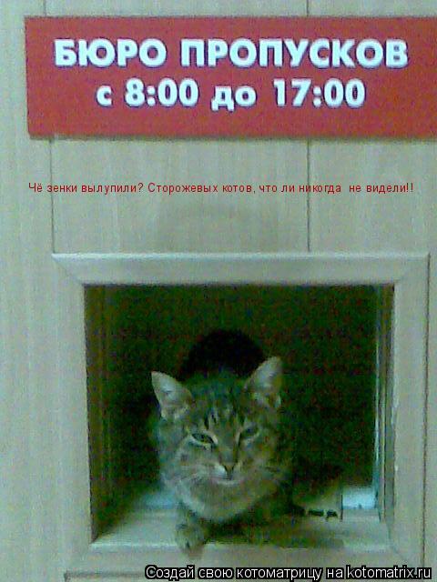 Котоматрица: Чё зенки вылупили? Сторожевых котов, что ли никогда  не видели!!
