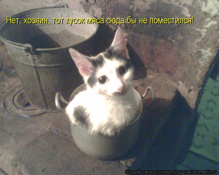 Котоматрица: Нет, хозяин, тот кусок мяса сюда бы не поместился!
