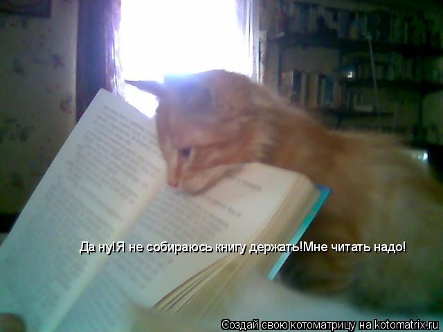 Котоматрица: Да ну!Я не собираюсь книгу держать!Мне читать надо!