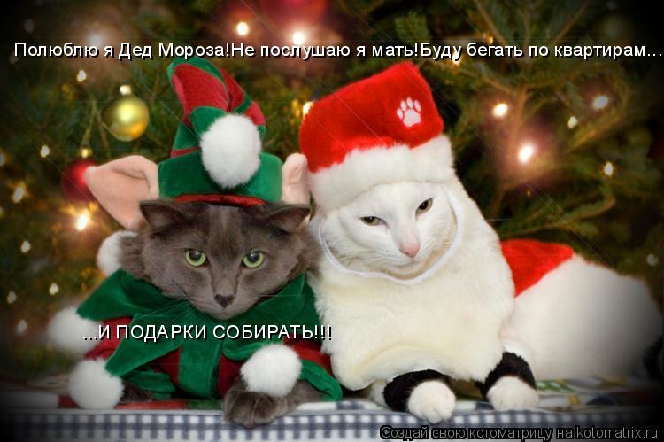 Котоматрица: Полюблю я Дед Мороза!Не послушаю я мать!Буду бегать по квартирам... ...И ПОДАРКИ СОБИРАТЬ!!!