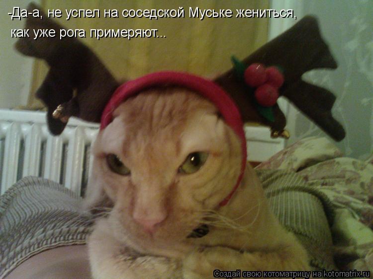 Котоматрица: -Да-а, не успел на соседской Муське жениться, как уже рога примеряют...