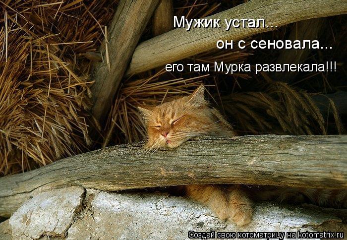 Котоматрица: Мужик устал... он с сеновала... его там Мурка развлекала!!!