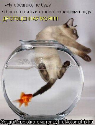 Котоматрица: -Ну обещаю, не буду  я больше пить из твоего аквариума воду! ДРОГОЦЕННАЯ МОЯ!!!!!