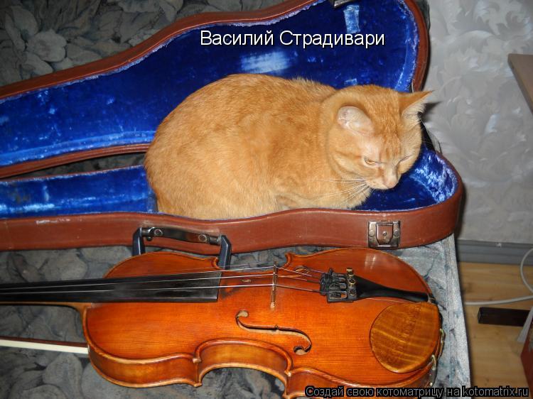 Котоматрица: Василий Страдивари
