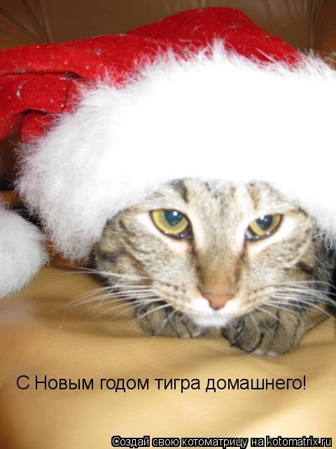 Котоматрица: С Новым годом тигра домашнего!