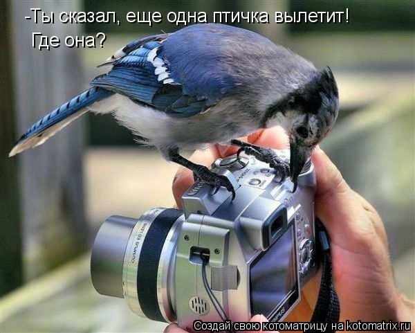 Котоматрица: -Ты сказал, еще одна птичка вылетит! Где она?