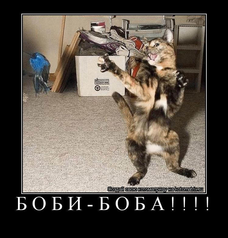 Котоматрица: БОБИ-БОБА!!!!