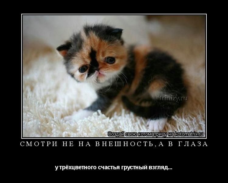 Котоматрица: Смотри не на внешность,а в глаза у трёхцветного счастья грустный взгляд...