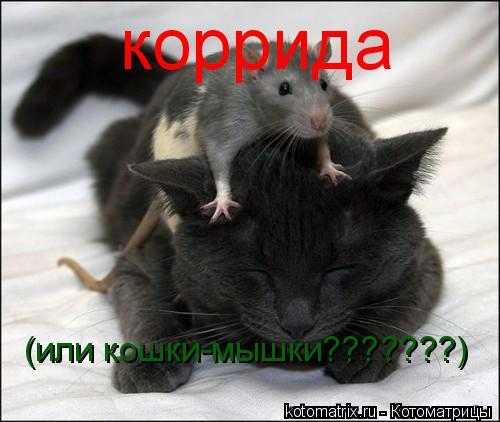 Котоматрица: коррида (или кошки-мышки???????)