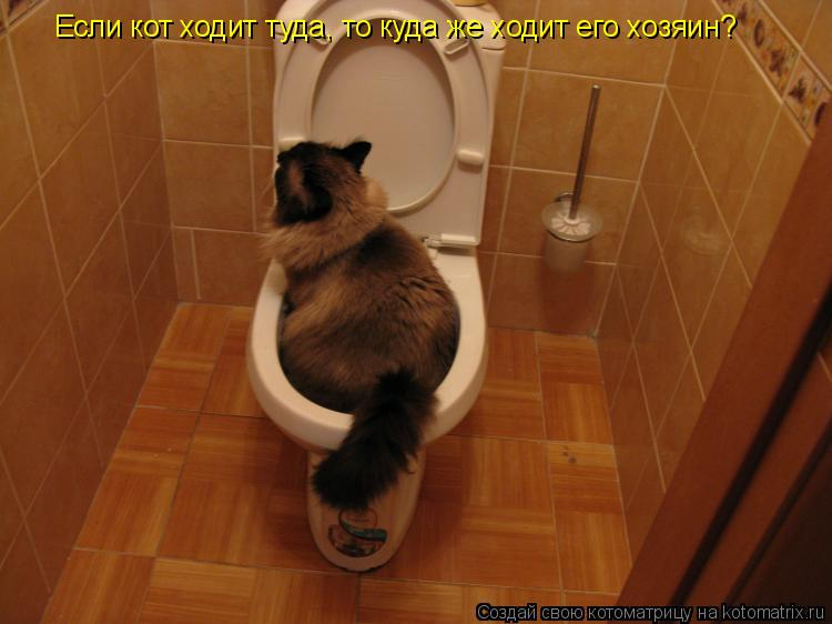 Котоматрица: Если кот ходит туда, то куда же ходит его хозяин?