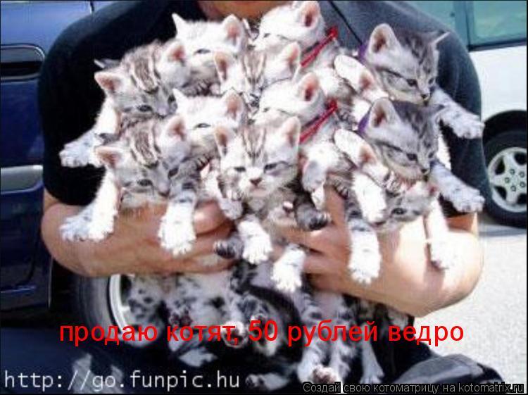 Котоматрица: продаю котят, 50 рублей ведро