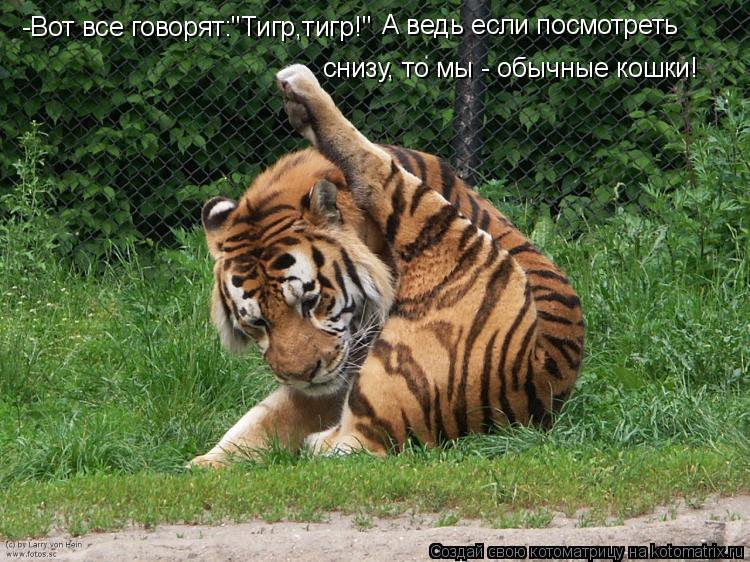 """Котоматрица: -Вот все говорят:""""Тигр,тигр!"""" А ведь если посмотреть  снизу, то мы - обычные кошки!"""