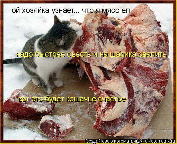 Котоматрица: ой хозяйка узнает....что я мясо ел надо быстрее съесть и на шарика свалить вот это будет кошачье счастье