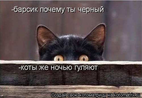 Котоматрица: -барсик почему ты черный -коты же ночью гуляют