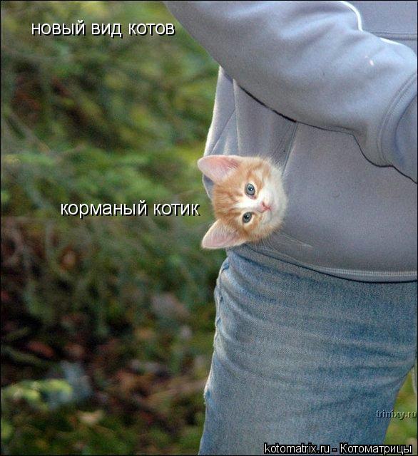 Котоматрица: новый вид котов  корманый котик