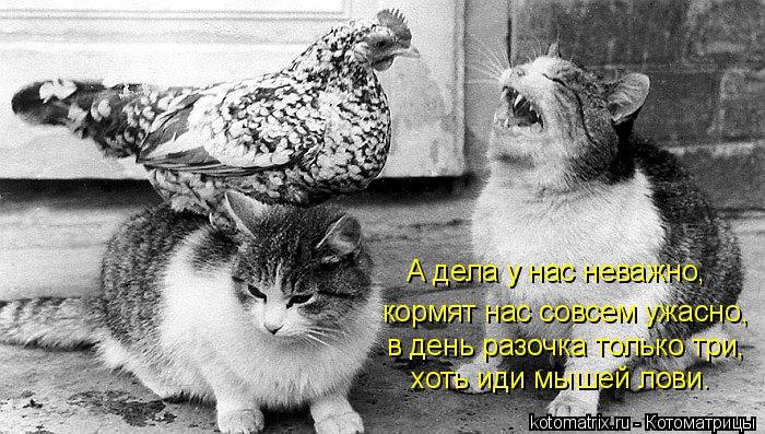 Котоматрица: кормят нас совсем ужасно, А дела у нас неважно, в день разочка только три, хоть иди мышей лови.