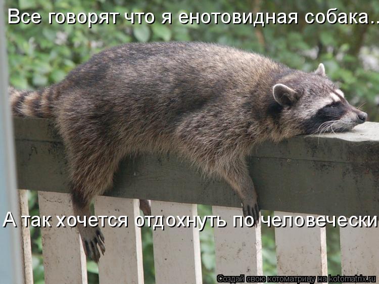 Котоматрица: Все говорят что я енотовидная собака... А так хочется отдохнуть по человечески...