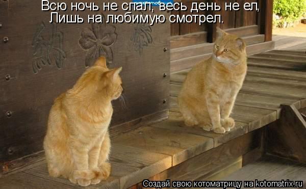 Котоматрица: Всю ночь не спал, весь день не ел , Лишь на любимую смотрел.
