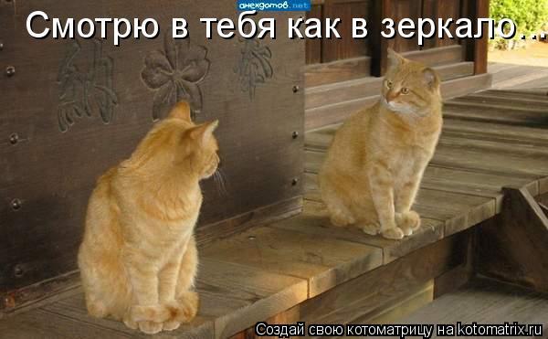 Котоматрица: Смотрю в тебя как в зеркало...