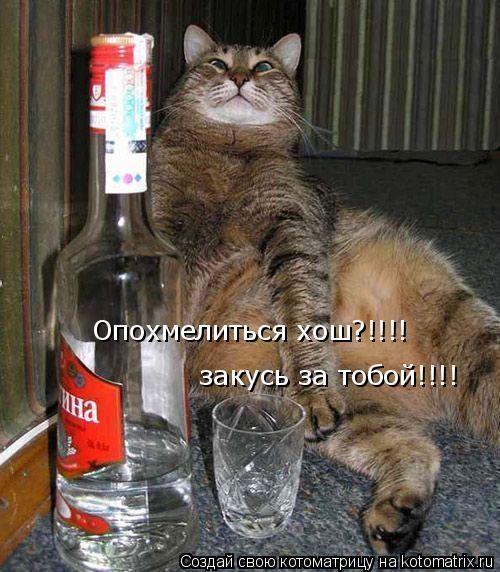 Котоматрица: Опохмелиться хош?!!!! закусь за тобой!!!!