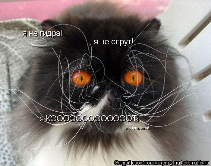 Котоматрица: я не гидра! я не спрут! я КОООООООООООООТ! и очень злой