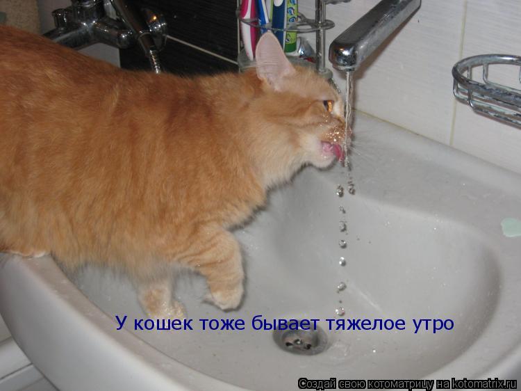 Котоматрица: У кошек тоже бывает тяжелое утро