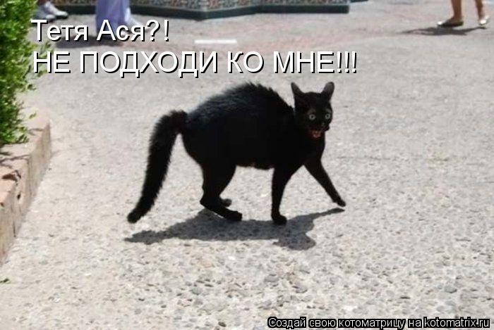 Котоматрица: Тетя Ася?! НЕ ПОДХОДИ КО МНЕ!!!