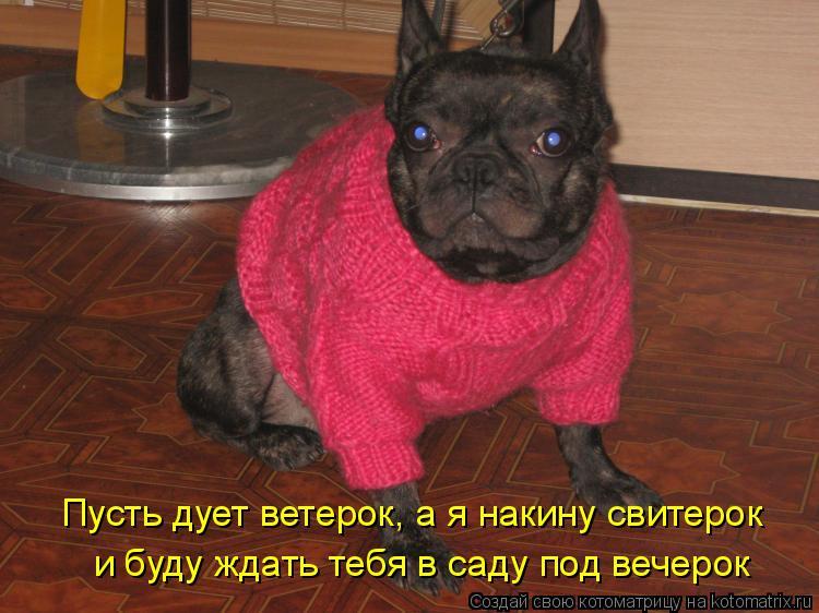 Котоматрица: и буду ждать тебя в саду под вечерок Пусть дует ветерок, а я накину свитерок