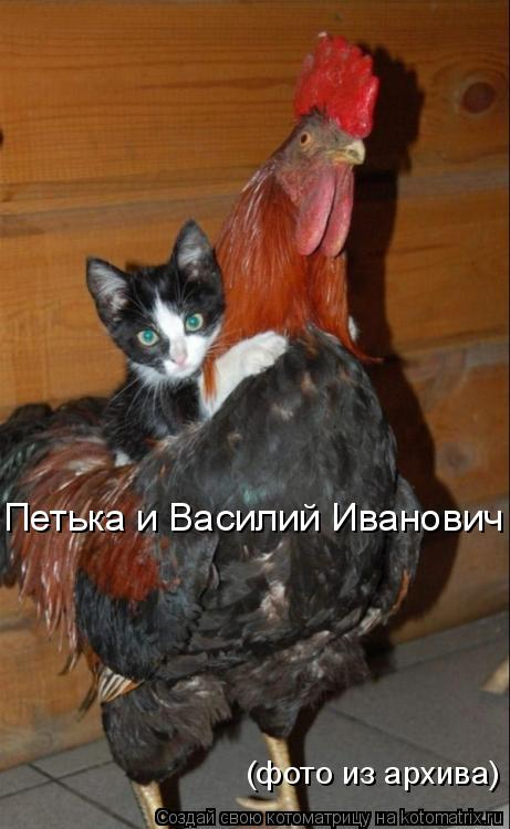 Котоматрица: Петька и Василий Иванович (фото из архива)