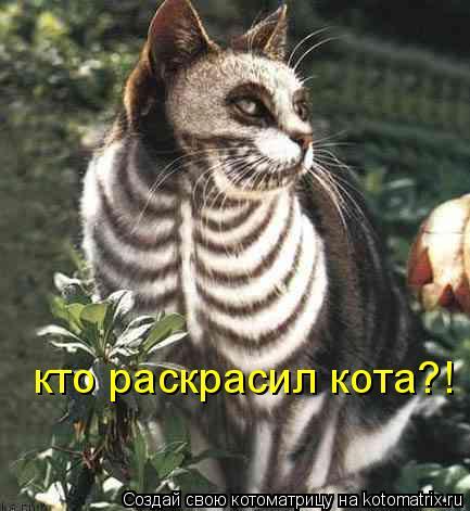 Котоматрица: кто раскрасил кота?!